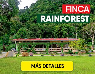 FINCA RAINFOREST